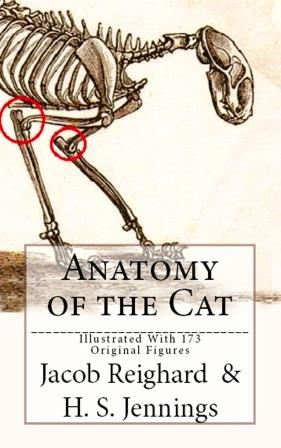 Anatomy of the Cat