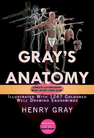 Gray's Anatomy-II